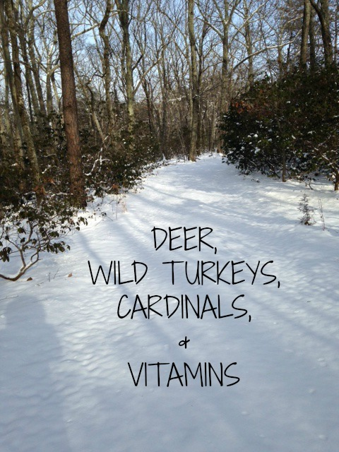 deer-wild-turkeys-blog