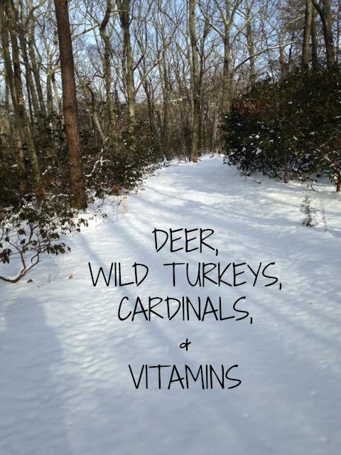 deer-wild-turkeys-blog